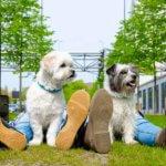 goede fotograaf eindhoven gezocht buiten gezin honden